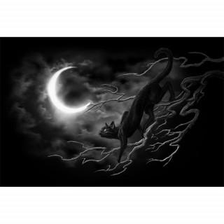 Carte postale Effets 3D à chat noir sur des branches  - Achemy